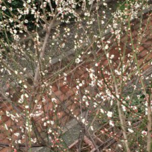 【春ももう目の前ですね~ (*^_^*) 】