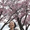 陽だまりの桜!