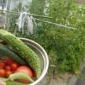 ラポール畑の収穫