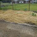 陽だまり農園2日目