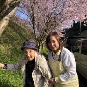 初桜見(天拝の郷横)