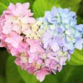 花と梅雨とあおぞら縁