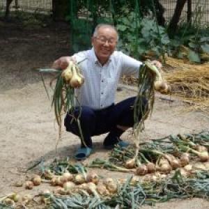 収穫、玉ねぎ、収穫♪