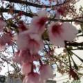 「3月行事③」