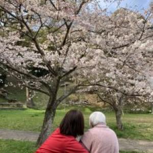 帰りの送迎時に桜見♪