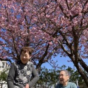 陽だまりの桜。日が経つにつれて・・・。