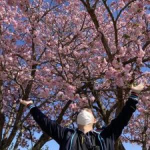 陽だまり桜は満開♪笑顔も満開♪
